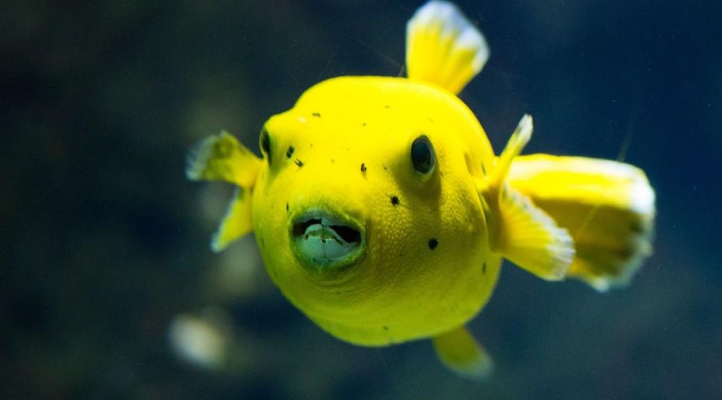 Zółta rybka